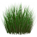 Семена газон, сидеральные культуры