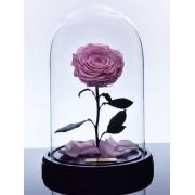 Вечная роза в колбе Красавица и Чудовище (Розовая)