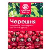 Гибридные мини деревья Черешня (Красный)