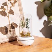 Лампа с диффузором эфирного масла Роза под куполом (Белый)